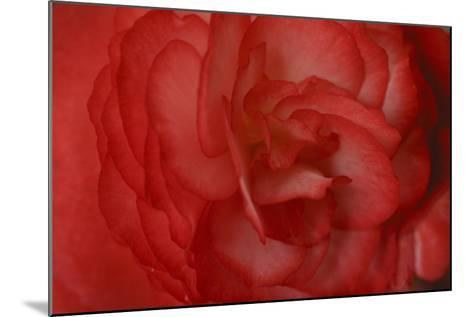 Red Begonia Abstract-Anna Miller-Mounted Photographic Print