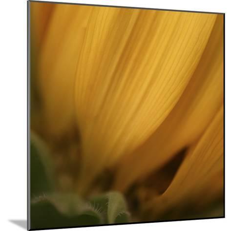 Yellow Sunflower Closeup-Anna Miller-Mounted Photographic Print