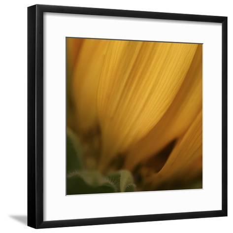 Yellow Sunflower Closeup-Anna Miller-Framed Art Print