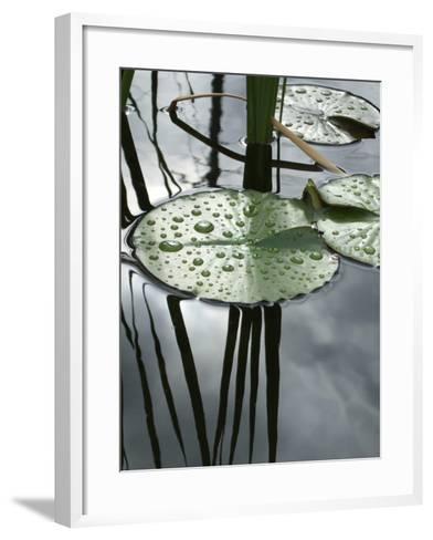 Water Lily Pond-Anna Miller-Framed Art Print