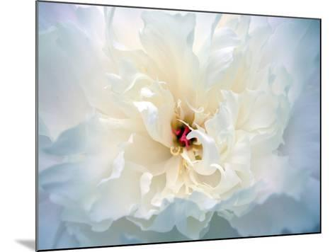 Peony Abstract-Anna Miller-Mounted Photographic Print