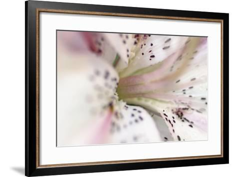 White Oriental Lilly Abstract-Anna Miller-Framed Art Print