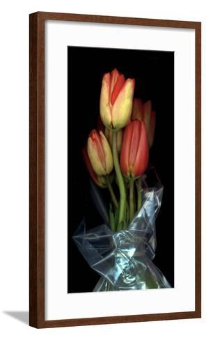 Tulips in Wrap on Black Background-Anna Miller-Framed Art Print
