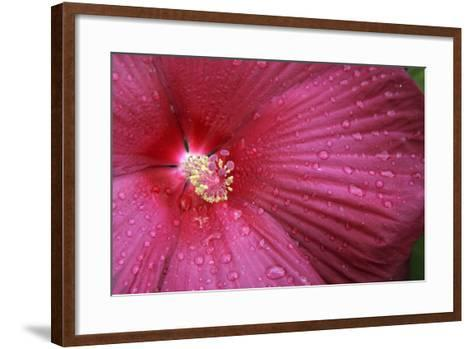 Red Hibiscus Abstract-Anna Miller-Framed Art Print