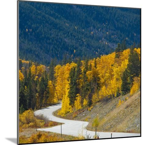 Fall Color of Aspen Trees and Evergreens Along Cottonwood Pass of Rocky Mountain National Park-Anna Miller-Mounted Photographic Print