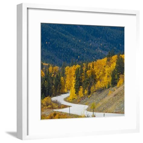 Fall Color of Aspen Trees and Evergreens Along Cottonwood Pass of Rocky Mountain National Park-Anna Miller-Framed Art Print