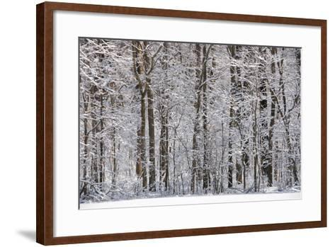 Winter in Eagle Creek Park, Indianapolis, Indiana, USA-Anna Miller-Framed Art Print