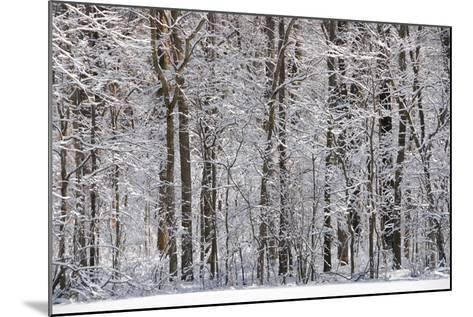 Winter in Eagle Creek Park, Indianapolis, Indiana, USA-Anna Miller-Mounted Photographic Print