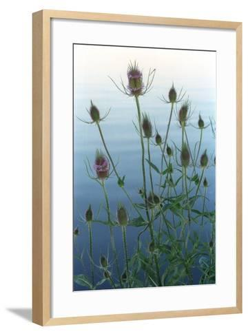 Plants on the edge of lake, Eagle Creek Park, Indianapolis, Indiana, USA-Anna Miller-Framed Art Print
