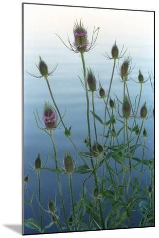 Plants on the edge of lake, Eagle Creek Park, Indianapolis, Indiana, USA-Anna Miller-Mounted Photographic Print