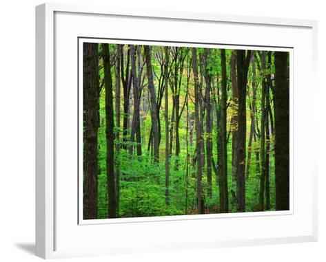 Yellowwood State Forest, Indiana, USA-Anna Miller-Framed Art Print