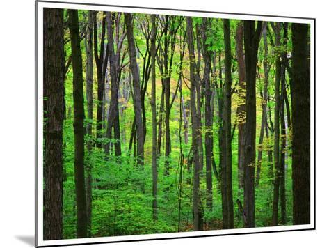 Yellowwood State Forest, Indiana, USA-Anna Miller-Mounted Photographic Print