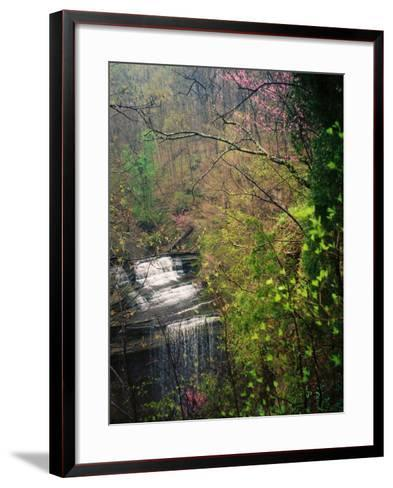 Spring in Clifty Creek State Park, Indiana, USA-Anna Miller-Framed Art Print