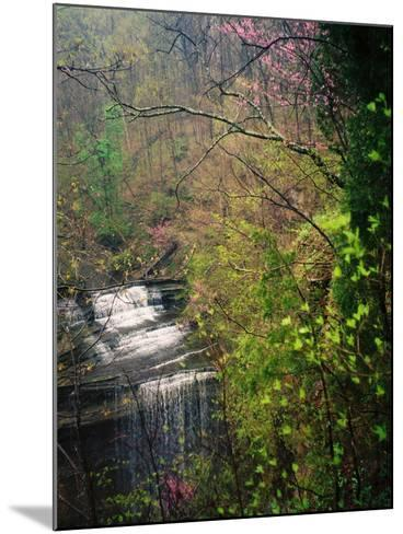 Spring in Clifty Creek State Park, Indiana, USA-Anna Miller-Mounted Photographic Print