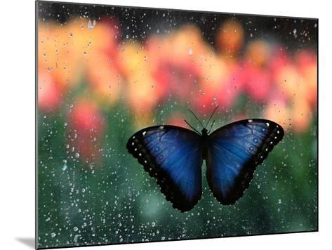 Butterfly in the White River Gardens, Indianapolis, Indiana, USA-Anna Miller-Mounted Photographic Print