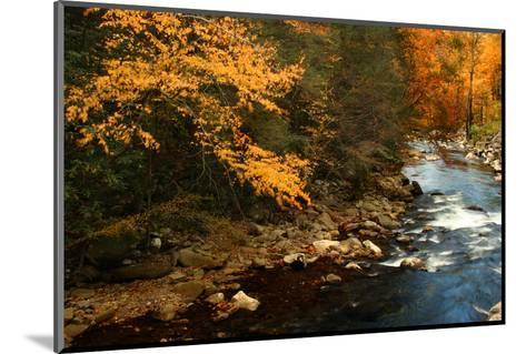 Golden foliage reflected in mountain creek, Smoky Mountain National Park, Tennessee, USA-Anna Miller-Mounted Photographic Print