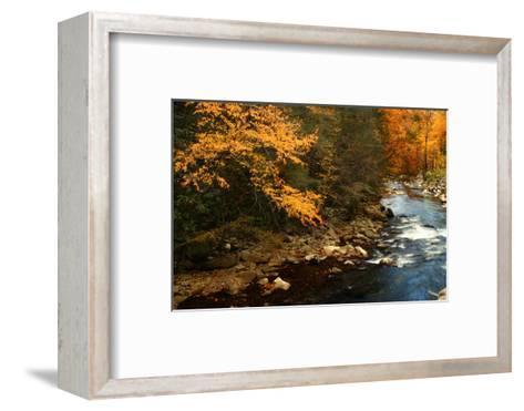 Golden foliage reflected in mountain creek, Smoky Mountain National Park, Tennessee, USA-Anna Miller-Framed Art Print