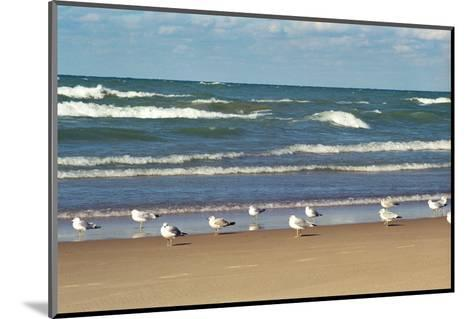 Flock of seaguls on the beaches of Lake Michigan, Indiana Dunes, Indiana, USA-Anna Miller-Mounted Photographic Print