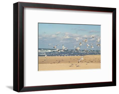 Flock of seaguls on the beaches of Lake Michigan, Indiana Dunes, Indiana, USA-Anna Miller-Framed Art Print
