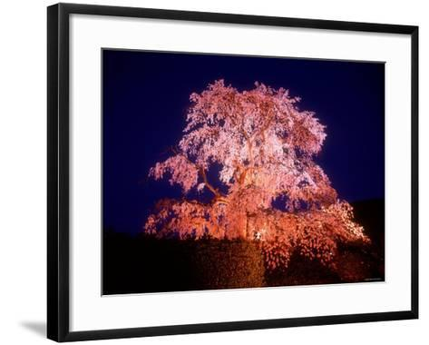 Cherry Blossoms by Night--Framed Art Print