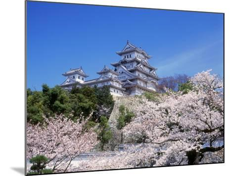 Cherry Blossoms and Himeji Castle--Mounted Photographic Print