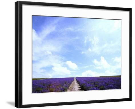 Lavender--Framed Art Print