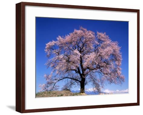Cherry Blossoms and Mt. Yastu--Framed Art Print