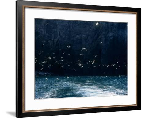 Seabirds--Framed Art Print