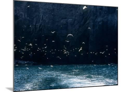 Seabirds--Mounted Photographic Print