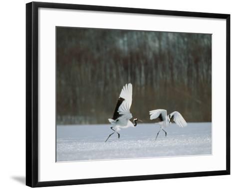 Cranes--Framed Art Print