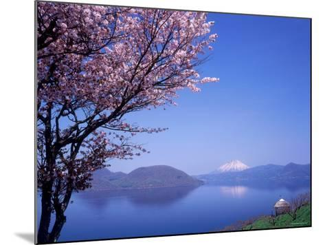 Cherry Blossoms and Lake Toyah--Mounted Photographic Print