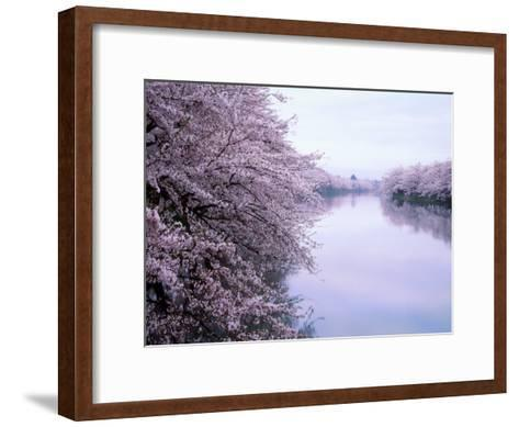 Cherry Blossoms and Moat--Framed Art Print