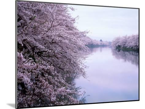 Cherry Blossoms and Moat--Mounted Photographic Print