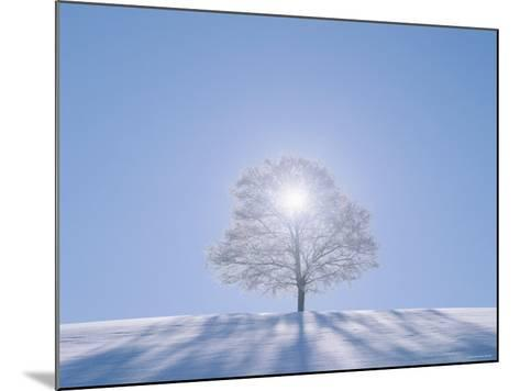 A Tree in the Snow Field--Mounted Photographic Print