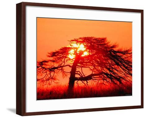A Pine Tree and Sunrise--Framed Art Print