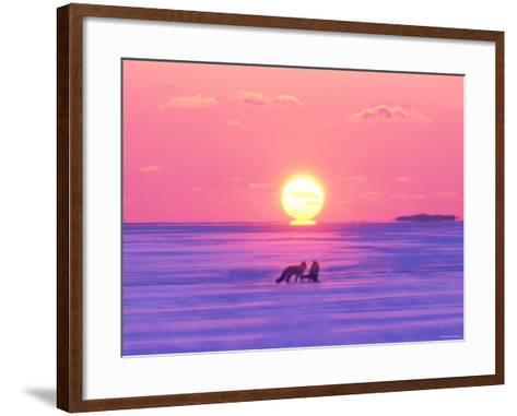 Pair of Fox in Winter Morning--Framed Art Print