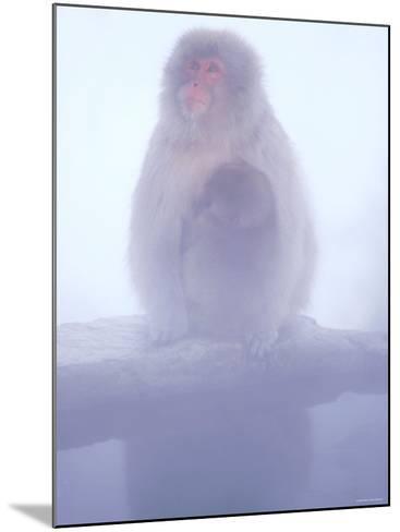Mother and Baby Monkeys at Jigokudani Hot Spring, Nagano, Japan--Mounted Photographic Print