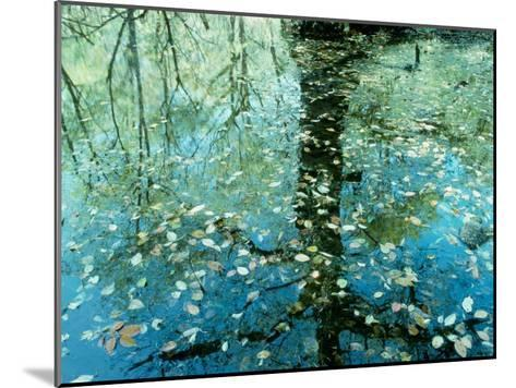 Leaves on the Water--Mounted Photographic Print