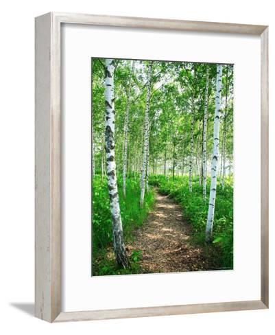White Birch Lane--Framed Art Print