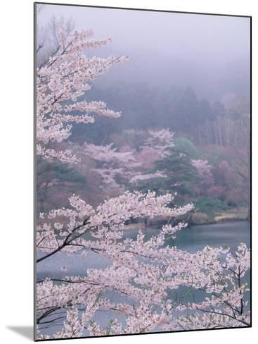 Cherry Blossoms and Pond--Mounted Photographic Print