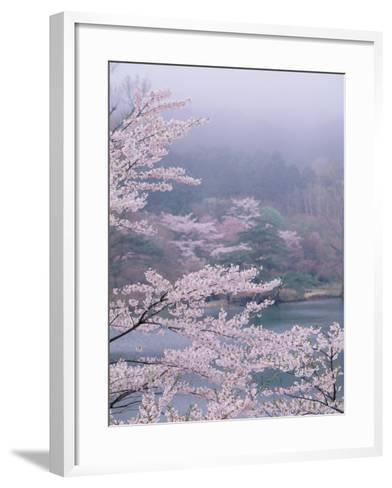 Cherry Blossoms and Pond--Framed Art Print