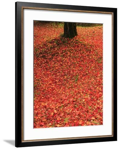 Fallen Maple Leaves--Framed Art Print