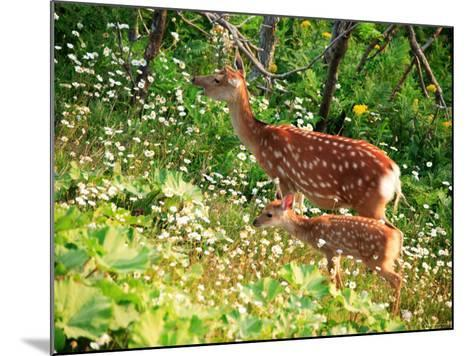 Deer--Mounted Photographic Print