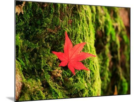 Maple Leaf on Moss--Mounted Photographic Print