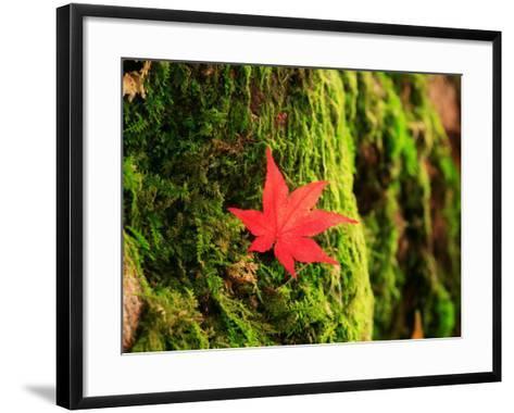 Maple Leaf on Moss--Framed Art Print
