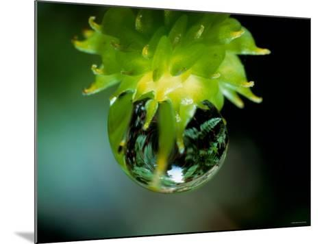 Waterdrops--Mounted Photographic Print