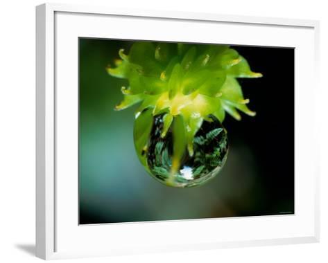 Waterdrops--Framed Art Print