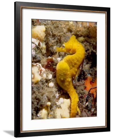 Seahorse--Framed Art Print