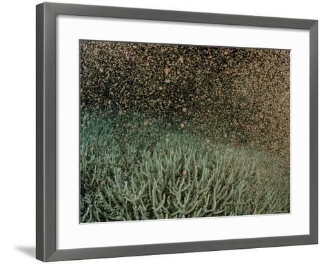 Coral Spawning--Framed Art Print