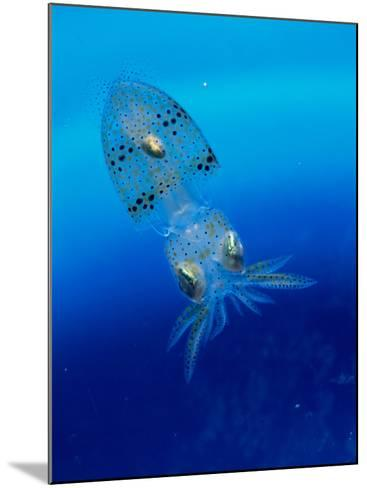 Baby Squid--Mounted Photographic Print